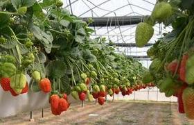 Бизнес идея - выращивание растений круглый год