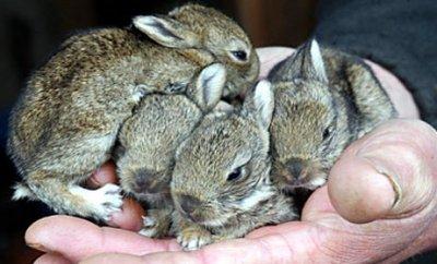 Бизнес план кролиководства