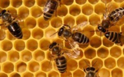 Ваш доход – пчелиный труд. Бизнес на разведении пчёл