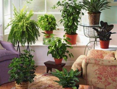 Бизнес по уходу за комнатными растениями